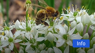 TX-Ture Farm Dive Into The Hive Field Trip