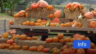 TX-Ture Farm Gourdgeous Pumpkins Festival