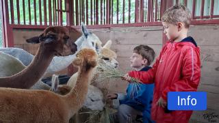 TX-Ture Farm Alpaca Experience Field Trip